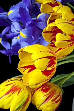 Tulips and Iris Flowers   ::)
