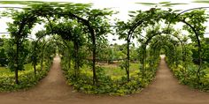 Some late apple trees, might not manage this lovely arch but can try...