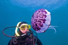 Are Jellyfish Dangerous to Scuba Divers?