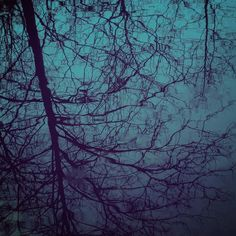 Art is where you find it - #reflection in a cold roadside puddle... #winter #trees #art #naturephotography #colorlove #wanderlust #journey #simplelife #winterblue #pattern #water #found #getoutside #goodness #naturelove