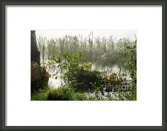 Misty Morning Makes the Webs Framed Print by Ismo Raisanen Hanging Wire, Fine Art America, My Arts, Framed Prints, In This Moment, Decoration, How To Make, Photography, Life