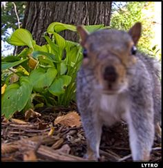 Click on the squirrel then click on the tree to see how the Lytro camera works.