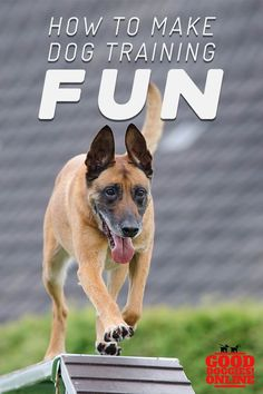 How to Make Dog Training Fun Dog training doesn't have to be boring. Check out these ways to make dog training fun and still have an obedient dog that listens. Dog Commands Training, Basic Dog Training, Training Your Puppy, Potty Training, Training Pads, Training Schedule, Best Puppies, Dog Behavior, Image Hd