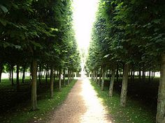 Houghton Hall - West Front - trees and path (ell brown) Tags: greatbritain trees england house tree unitedkingdom path norfolk entrance eastanglia westfront cholmondeley houghtonhall pleachedlimes westnorfolk sirrobertwalpole lordcholmondeley Houghton House, Houghton Hall, England Houses, Marquess, British Prime Ministers, Ell, World Best Photos, Norfolk, Paths