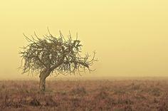 Planeta verde ? by Fernando Pinho on 500px