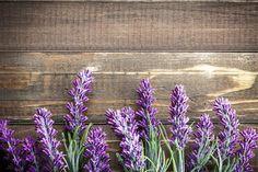 Close-up van lavendel Afbeelding bij AllPosters.nl