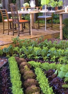 Eat Whole Food: Front Yard Edible Landscapes!