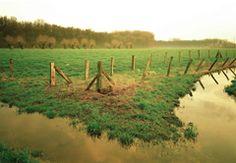 Viehweide, Meerbusch, Rheinland (1994)
