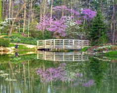 Photo cred to Frank Doherty's wonderful photo!   Check out the Edith J. Carrier Arboretum Website for more photos like this: http://www.jmu.edu/arboretum/gallery.shtml