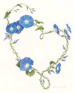 morning glory flower vine - Google Search