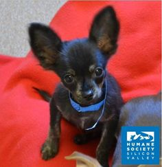 We can't guarantee that Jax will grow into his ears, but we CAN guarantee he will be just as cute!