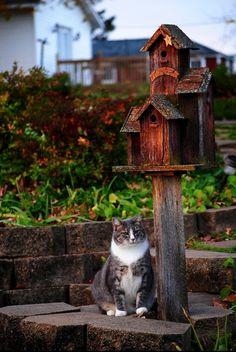 watchcat (by chatblanc1)