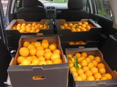 De reparto por #Alemania #Naranjas y #arroz #bomba de #Pego • Echt #Spanische #Apfelsinen und bomba #Reis in #Papenburg #Deutschland! • mehr Informationen: http://www.pegonatura.es/ info@pegonatura.es • Bon appetit! — en Papenburg.