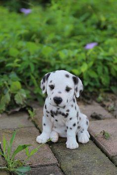 Hi-Line Gift Ltd. Dalmatian Puppy Statue Hi-Line Gift Ltd. Dalmatian Puppy Statue The post Hi-Line Gift Ltd. Dalmatian Puppy Statue appeared first on Animal Bigram Ideen. Baby Animals Super Cute, Cute Baby Dogs, Cute Little Animals, Cute Funny Animals, Funny Dogs, Adorable Puppies, Cute Puppy Pics, Cute Pics, Lil Baby