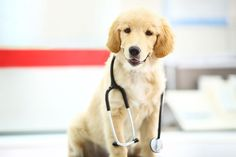 Mike Hutchinson recommends probiotics instead of antibiotics to treat GI tract illnesses in dogs. Probiotics For Dogs, Dog Owners, Animals, Animales, Animaux, Animal, Animais