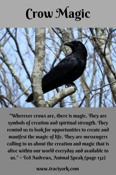 Witch Quote Challenge Crow Magic, Ted Andrews Quote If you love fantasy & dragons as much as we do, check our our canvas wraps, photo prints & tees - click that link! Witch Spell Book, Witchcraft Spell Books, Magick Spells, Crow Spirit Animal, Animal Spirit Guides, Witch Quotes, Witch Aesthetic, New Energy, Animal Totems