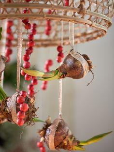 Vier de feestdagen met vliegende Amaryllis bollen | Mooi wat planten doen