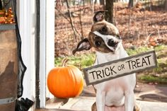 2015 Trick-or-Treat Times for Acadiana