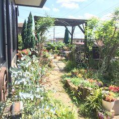 小さな庭の画像 by amiさん | 小さな庭と植物のある暮らしと手作りガーデニングコンテストと手作りの庭と枕木花壇DIYとガーデニングと花のある暮らしとami's garden