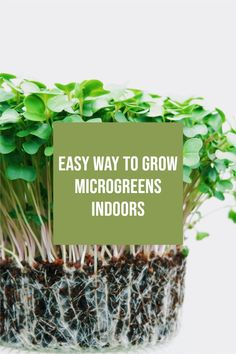 The great thing about growing microgreens is that more of the plant can be used in your food. When you grow large leafy greens, you often separate the leave from the thick stems, which are discarded. Container Gardening, Gardening Tips, Health And Nutrition, Health And Wellness, Growing Microgreens, Growing Lettuce, Miniature Plants, Growing Seeds, Frugal Living Tips