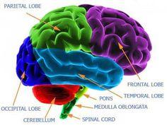 brain dopamine www.swisshealthmed.de