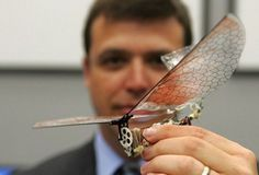 Causing quite a buzz: Lead researcher Dr Gregory Parker holds a small, winged drone that resembles an insect. military's goal is to make the devices so small that they resemble birds and even insects Micro Drone, Palestine, Dragonfly Drone, Spy Drone, Small Drones, Islam, 3d Cnc, Drone Technology, Winged Liner