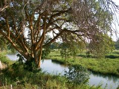 Beautiful scenery from Hazyview, South Africa. Kruger Park safari tour!