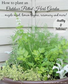 ~How to Plant an Easy Outdoor Potted Herb Garden and Tips for Planting and Taming Invasive Mint! Healthy and Delicious!~