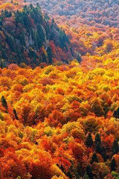 Autumn Ocean. beautiful amazing