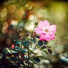 Осенний цветок by Elena Galitskaya on 500px