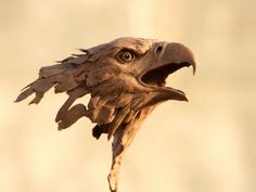Powerful animals from scrap metal - wonderfully liquid gorgeousness.....  o