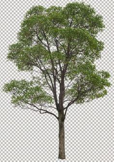 Photoshop Tree Library (part - 60 big trees shaded standard file isolated background