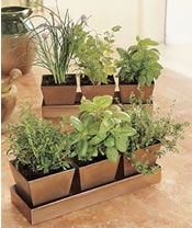 Cool tips for herb gardens...cute containers to keep in sunroom.
