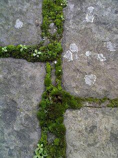 Moss between the cracks Moss Garden, Planting Succulents, Garden Paths, Garden Landscaping, Cacti Garden, Garden Plant Stand, Plant Stands, Succulent Terrarium, Air Plants