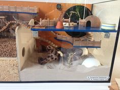 [Aquarium] Glasbehälterverbund 2.40m x 0,5m für Dsungi Murphy - Gehegevorstellung - www.das-hamsterforum.de