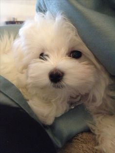 Cute Baby Dogs, Cute Dogs And Puppies, Pet Dogs, Dog Cat, Pets, Doggies, Baby Animals, Funny Animals, Cute Animals