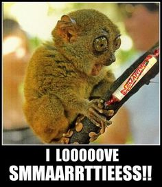 Which Hunger Games Character Are You? - Funny Animal Quotes - - OH MY GOSH . 25 Best Funny animal Quotes and Funny Memes The post Which Hunger Games Character Are You? appeared first on Gag Dad. Animal Humour, Funny Animal Quotes, Cute Funny Animals, Funny Animal Pictures, Funny Cute, Funniest Animals, Hilarious Pictures, Funny Monkeys, Super Funny