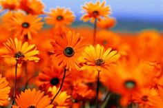 Photography Tips and Spring Flowers in the Western Cape of South Africa