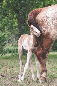 Foal sticking close to her mother.
