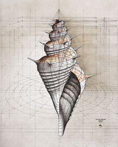 Inspirationsgraphiques-Livre-nombre-or-architecte-Rafael-Araujo-illustrateur-nature-dessins-graphiste-3D-inspiration-art-mathematiques-book-Kickstarter-10
