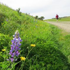 Top 5 Places to See Wildflowers in Monterey County | Blog Monterey