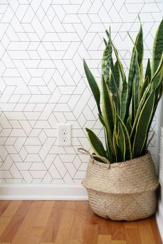 Modern Wallpaper with Snake Plant in BasketYou can find Wallpaper accent wall and more on our website.Modern Wallpaper with Snake Plant in Basket Wallpaper Accent Wall Bathroom, Hallway Wallpaper, Plant Wallpaper, Wallpaper Decor, Home Wallpaper, Snake Wallpaper, Office Wallpaper, Wallpaper Ideas, Best Living Room Wallpaper