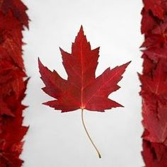 Canadian flag face painting i am canadian pinterest flag face canadian flag red maple leaves on snowy white background i like the jagged edges on the sides magnificiencio im gonna put this one hanging from my sciox Choice Image