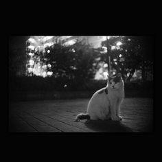https://flic.kr/p/zKkqo4 | Totoro October 2015  #cat #smallcats #blackandwhitephotography