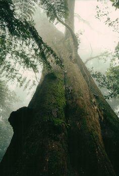 Australian Forest - by Chris Tayler
