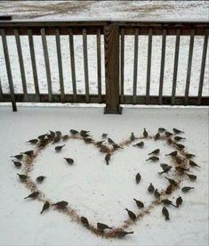 Winter Bird Seed- served with love. I Love Heart, Happy Heart, My Heart, Heart In Nature, Heart Art, Love Birds, Beautiful Birds, Beltane, Winter Fun