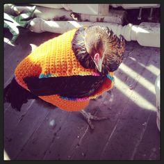 Chicken in a sweater! Pet Chickens, Backyard Chickens, Raising Chickens, My Pet Chicken, Chicken Sweater, Crochet Animals, Jumpers, Crochet Patterns, Lifestyle