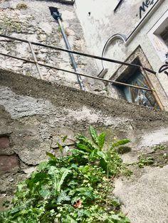 Salzburg, House Styles, Plants, Home Decor, Homemade Home Decor, Flora, Plant, Decoration Home, Planting