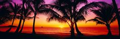 Palm Cove Sunrise by Peter Lik
