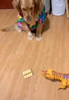 This is a golden retriever who is very afraid of death Cute Funny Dogs, Cute Funny Animals, Funny Babies, Cute Baby Animals, Cute Animal Videos, Funny Animal Pictures, Funny Dog Videos, Baby Dogs, Cute Puppies